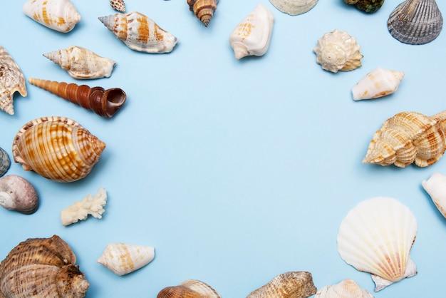 Cadre vue de dessus de coquillages sur fond bleu