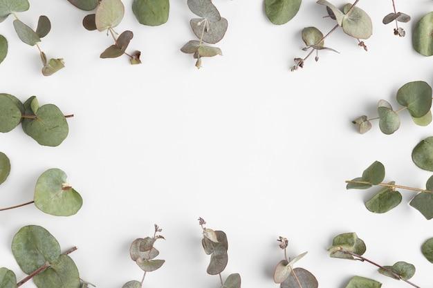 Cadre vue de dessus des feuilles