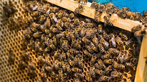 Cadres d'une ruche. abeilles travaillant dans une ruche. les abeilles transforment le nectar en miel.