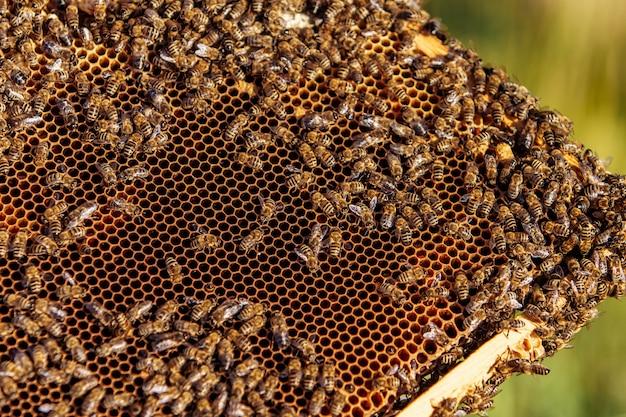Cadres d'une ruche d'abeilles.