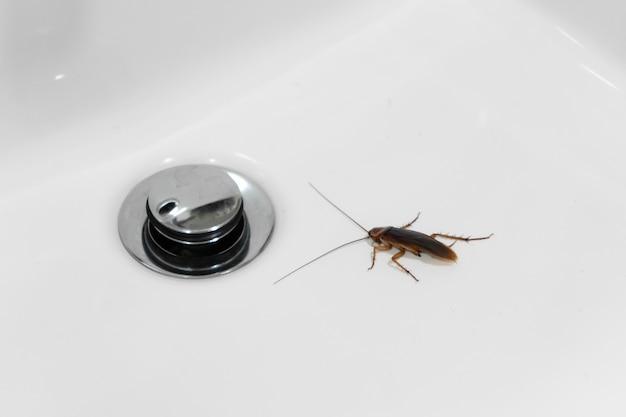 Cafard dans la salle de bain sur le lavabo. le problème avec les insectes.