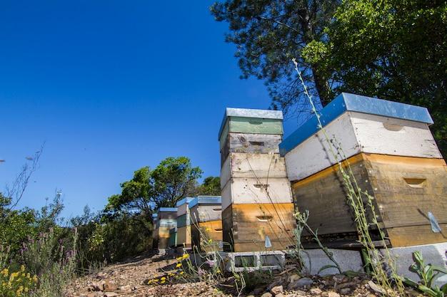 Caisses en nid d'abeille sur la nature entourée de végétation.