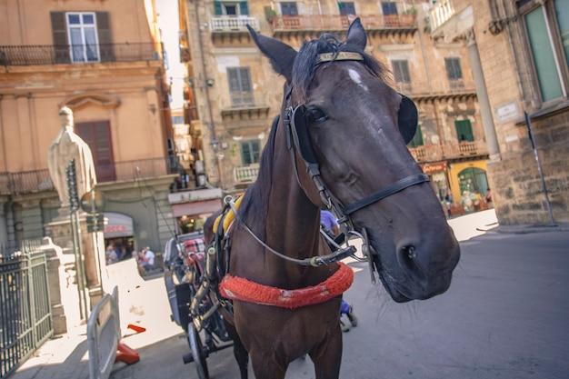 Calèche et chevaux à palerme le long des rues publiques