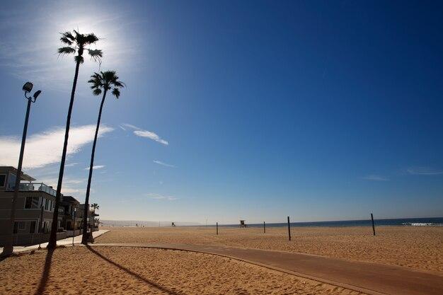 California newport beach avec de hauts palmiers