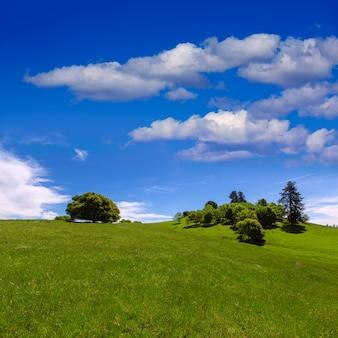 Californie, prés, collines, à, chêne, arbre