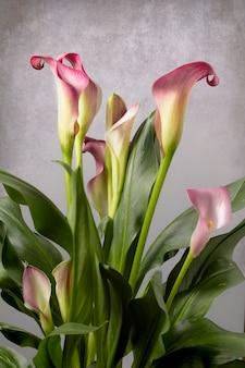 Calla avec des fleurs plante avec des fleurs photographie de fleurs d'intérieur