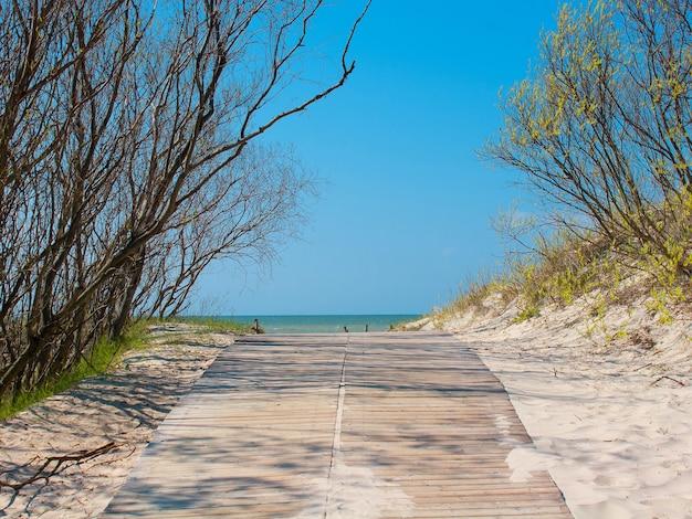 Calme vue sur la mer ensoleillée avec dunes de sable et arbres de la route en bois