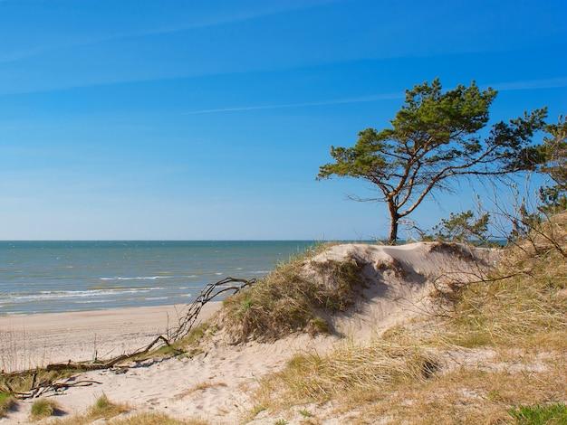 Calme vue mer ensoleillée avec dunes de sable et pins