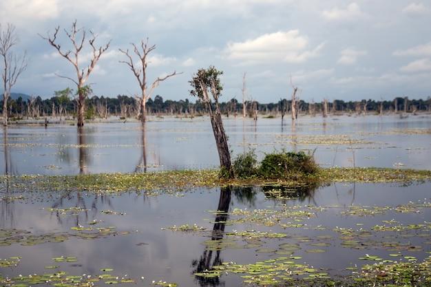 Cambodge angkor wat