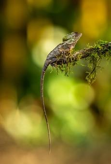 Caméléon perché sur une branche dans la nature