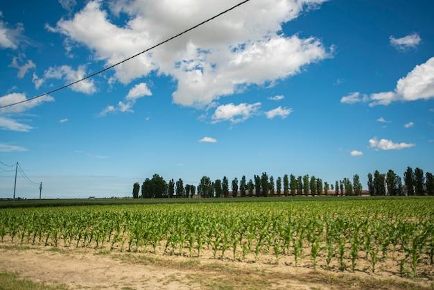 Campagne avec champ de maïs au printemps, champ de maïs de récolte