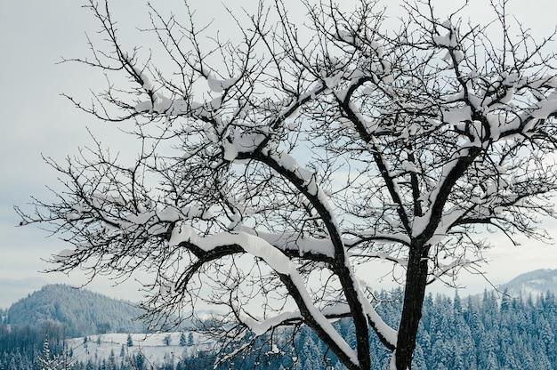Campagne d'hiver paysage de montagne arbre enneigé à l'avant pittoresque station balnéaire européenne