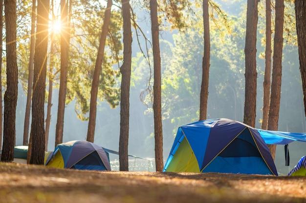 Camping dansant dans la forêt de pang ung, province de mae hong son, thaïlande