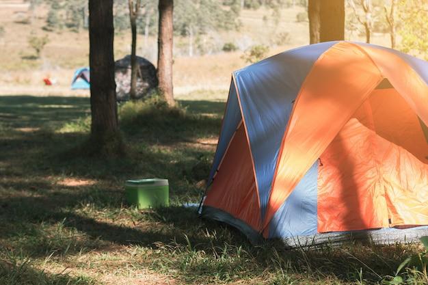 Camping et tente sous la pinède