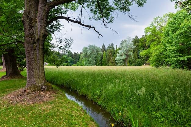 Canal de fossé d'eau sur prairie herbeuse dans le parc de la ville d'été