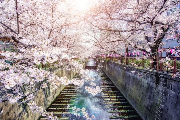 Canal meguro bordé de fleurs de cerisier à tokyo, au japon. printemps en avril à tokyo, au japon.