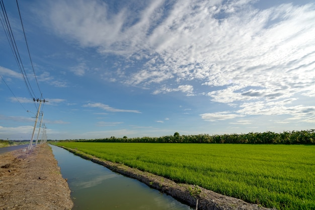Canal de paddy