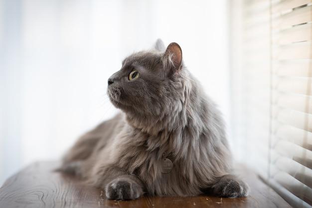 Sur le canapé, un chat est assis et regarde quelque chose