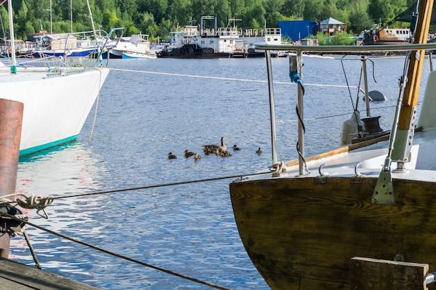 Canard avec une couvée de canetons nager parmi les navires amarrés dans la marina