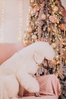 Caniche blanc assis près de l'arbre de noël
