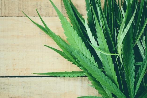 Le cannabis laisse la plante de marijuana sur une feuille de chanvre en bois pour extraire des soins médicaux naturels