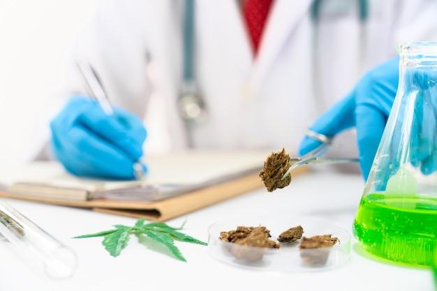 Cannabis médical sur la table se bouchent