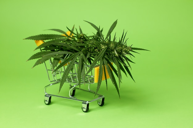Cannabis à vendre.