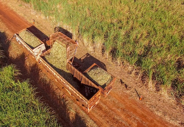 Canne à sucre hasvest plantation aérienne