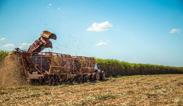 Canne à sucre hasvest plantation