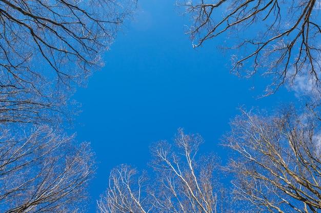 La canopée des grands arbres