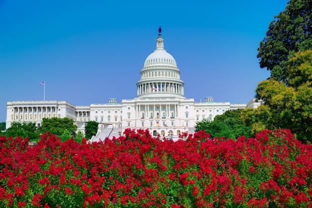 Capitole de washington dc fleurs roses usa