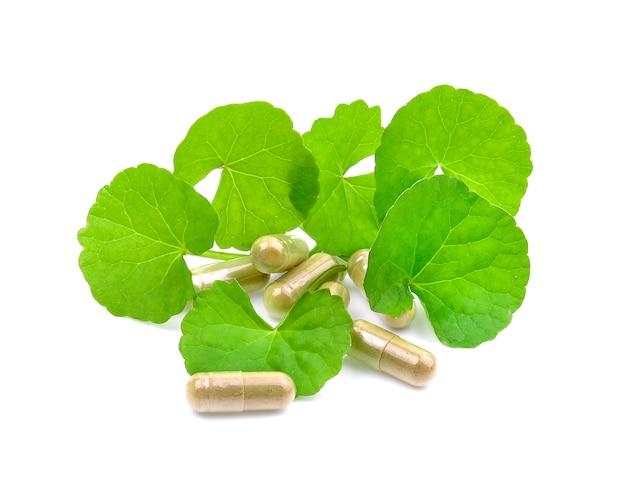 Capsule à base de plantes et green asiatic pennywort isolé sur fond blanc.