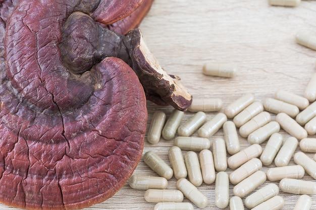 Capsule de champignons de ling zhi ou ganoderma lucidum