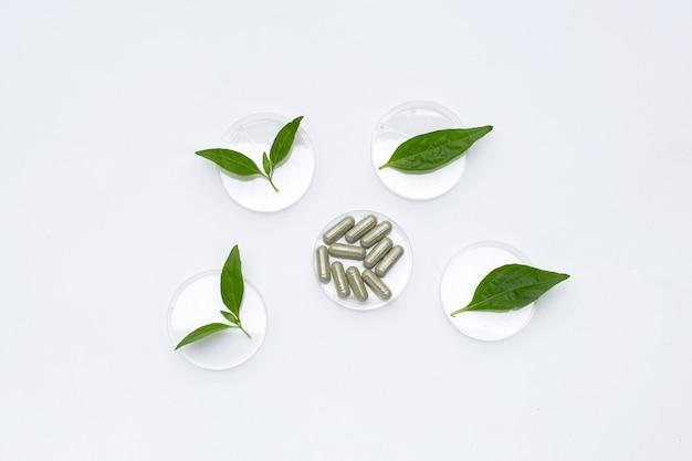 Capsule avec kariyat ou andrographis paniculata feuilles vertes dans des boîtes de pétri sur blanc