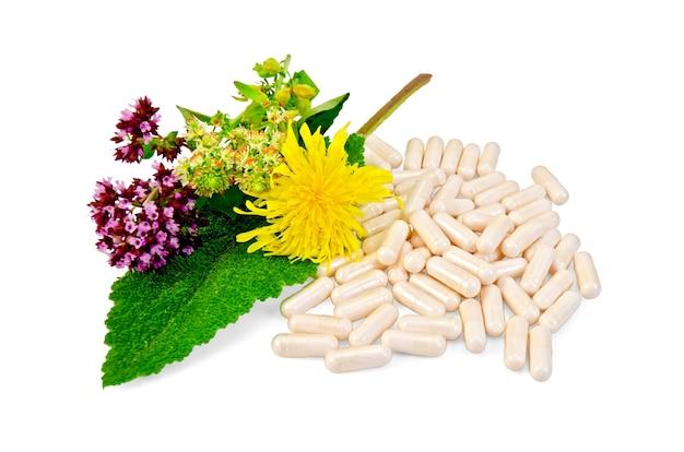 Capsules beiges, fleurs d'origan, mignonette, aunée, feuille de sauge isolée
