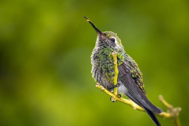 Capture D'écran D'un Colibri Perché Sur Une Branche D'arbre Photo Premium