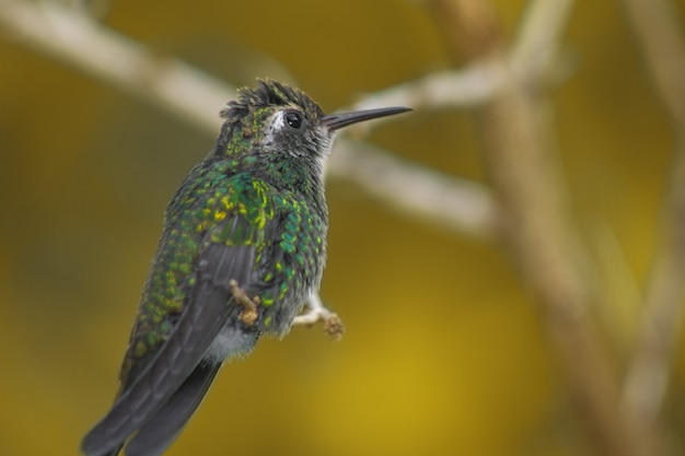 Capture d'écran d'un colibri perché sur une branche d'arbre