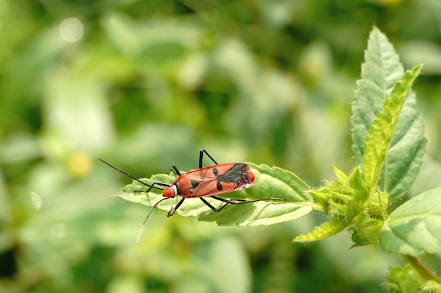 Capture d'écran d'un insecte rouge et noir assis sur une feuille dans un cadre flou