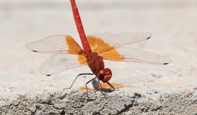 Capture d'écran d'une jolie libellule rouge et jaune sur le sol en pierre