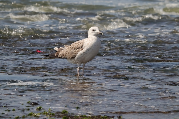 Capture d'écran d'une mouette blanche dans l'eau sur la côte