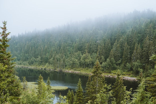 Capture en grand angle d'une rivière et d'arbres un jour brumeux