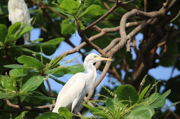 Capture sélective d'une aigrette perchée sur une branche