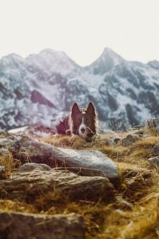 Capture verticale d'un chien de berger de cumberland sur une montagne rocheuse sous la lumière du soleil
