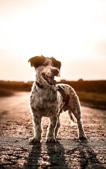 Capture verticale d'un chien debout à l'extérieur au coucher du soleil regardant de côté