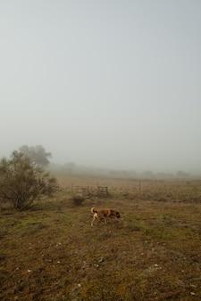 Capture verticale d'un chien jaune dans un champ brumeux