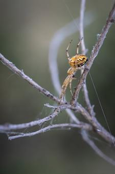 Capture verticale d'une énorme araignée dans son environnement naturel