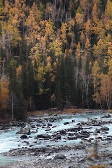 Capture verticale de la forêt d'automne à xijiang, chine