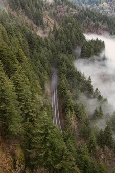 Capture verticale en grand angle d'une route entourée d'arbres