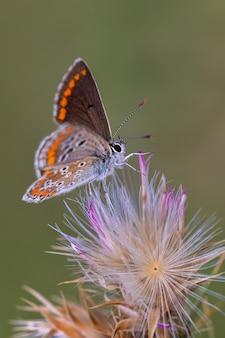 Capture verticale d'un papillon sur une plante