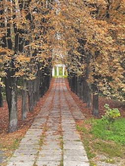 Capture verticale d'une ruelle dans une forêt ou un parc d'automne